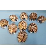 9 Tiger Cowrie Seashells Sea Shell Arts Crafts Jewelry Classroom Study N... - $22.95