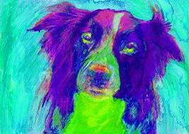 Border Collie Art Print, Collie Doig Wall Art Decor, Colorful Abstract P... - $403,58 MXN