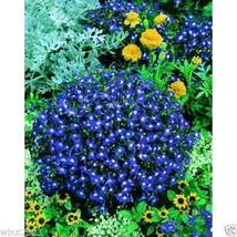 SHIP FROM US Lobelia Seeds -Mrs. Clibran, 300 seeds WB Trailing Flower Seed - $19.99