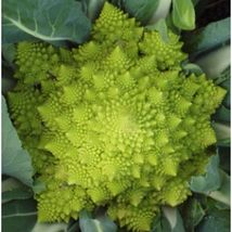 SHIP From US, 50 Seeds Cauliflower Seeds, Vegetable Seed AM - $18.99