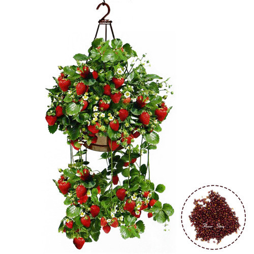200Seeds Planting Hanging Strawberry Seeds semenatsvety garden bonsail Fruit