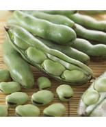 5pcs Horsebean Seeds Vicia Faba Original Packaging Vegetables Seed - $1.99