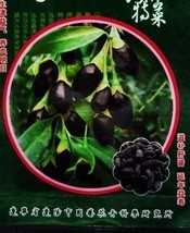 30Seeds True Rare Black Goji Lycium Ruthenicum Murray Herb Seeds - $11.00