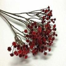 1 Packet of 200 Seeds Babys Breath Red Flower/Caryophyllaceae / Gypsophila Elega - $17.62