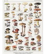 Decoration Poster.Home room interior design.Mushroom types.Wall Decor.11433 - $10.89+