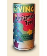 LIVING CHRISTMAS TREE GROWING KIT- GROW XMAS BALSAM FIR FROM SEEDS  - $16.99