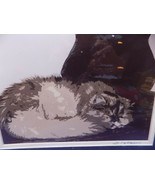 CAT NAPPING is an Art Signed Patterson 2008 Photography NM Southwestern USA - $28.50