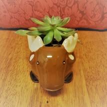 "Echeveria Succulent in Ceramic Animal Planter, 5"" Brown Moose Glazed Pot + Plant image 2"