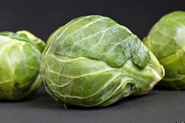 Brussel Sprouts Seed, Churchill, Heirloom, Organic, Non GMO, 500 Seeds, ... - $20.61