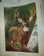 Drop Tine Dream Deer Poster Print 18 x 24 with and w/o matt Border VGC u... - $13.00