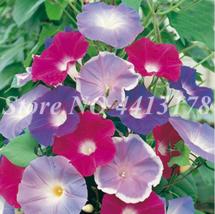 100pcs Mixed Color Hanging Petunia Garden Blooming Indoor Petunia Natura... - $2.72