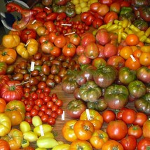 Mixed 27 Type Tomato Family 100 seeds middle large giant organic heirloo... - $13.03