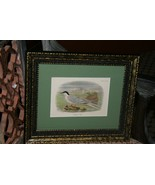 ANTIQUE AUTHENTIC 1897 19C SIGNED FRAMED LITHOGRAPH LLYOD NATURAL HISTOR... - $47.49
