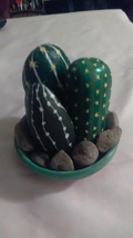 Cacti image 1