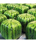 Big Red Square Watermelon Heirloom Seeds 50 Seeds / Pack, Foursquare Wat... - $12.20