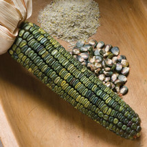 Oaxacan Green Corn Seeds, Vegetable Seeds, Ship From US - $16.00