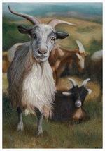 Goats - A4 print of original colour pencil  artwork  + matt and mount - $40.00