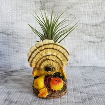 Turkey with Air Plant, Live Tillandsia Airplant in Bird Candle Holder Planter image 5