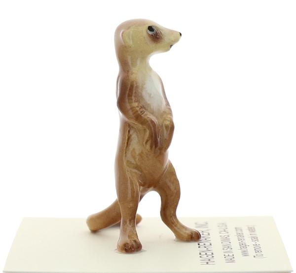 Meerkat02