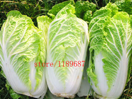 BEST PRICE 200 Seeds Chinese cabbage vegetable plants , FS DIY Vegetable... - $6.82