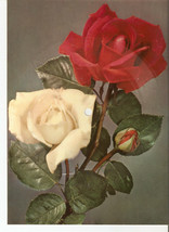 Old Musical 45rpm Record Postcard Schallbildkarte Roses Gorling Birthday... - £6.19 GBP