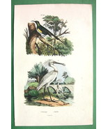 BIRDS Sunbird Spoonbill - 1836 H/C Color Natural History Print - $10.71