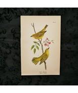 1890 B.H. Warren Lithograph Print Plate# 41 Yellow Warbler - $30.95