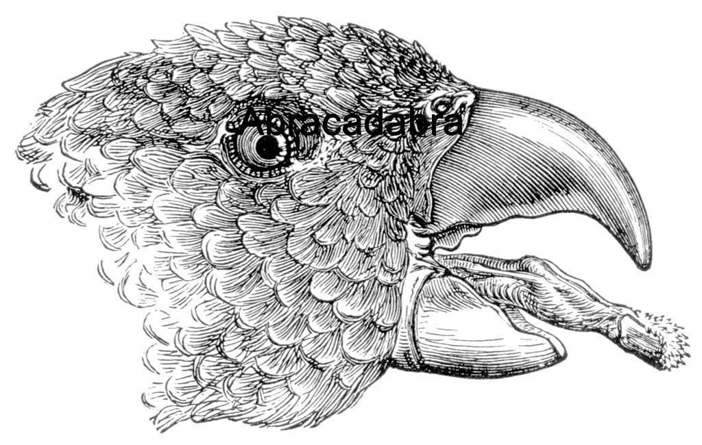 PARROT FACE NEW mounted rubber stamp - $5.00