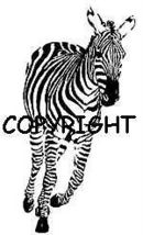 ZEBRA RUNNING AT YOU ~ NEW mounted rubber stamp - $8.50
