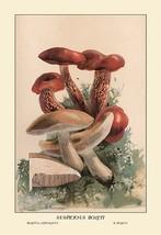 Suspicious Boleti by W. Hamilton Gibson - Art Print - $19.99+