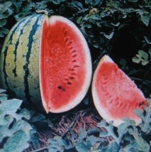 SHIPPED FROM US 10 Crimson Sweet Watermelon Antioxidant Lycopene Seed, JK05 - $9.92