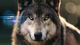 Lobo2 thumb200