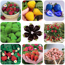 BEST PRICE 100 Seeds BELLFARM 9 Packs Strawberry,DIY Fruit Seeds QC386M DG - $6.99
