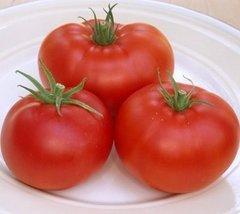250 Seeds of Champion II Vfnt Hybrid - Tomatoes Mid Season - $37.52