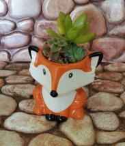 Mini Fox Planter with Succulent Arrangement, Succulent Gift, Animal Planter Pot