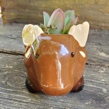 "Kalanchoe Succulent in Ceramic Moose Planter, 5"" Brown, Animal Pot, Deer Elk image 6"