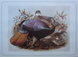 BEAUTIFUL BIRD PRINT ~ HIMALAYAN MONAL ~ JOSEF WOLF - $50.48