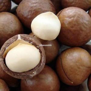 2pcs Hawaiian Macadamia Nut Samen Macadamia Integrifolia Baum Samen ElR8