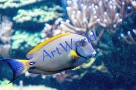 Digital download,Saltwater fish,Photography,Art,Christmas decor wall,Pri... - $4.50