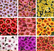 200 SEED 9 Colors Calibrachoa Organic Petunia Seed A - $4.65