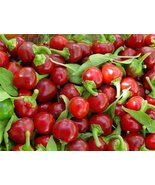 Red Cherry Hot Pepper Seeds, NON-GMO, Heirloom, Variety Sizes 2000 - $25.74