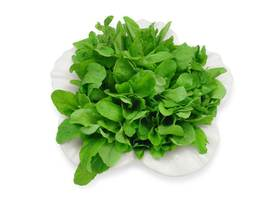 SHIP From US, 1 GRAM 600 Seeds Arugula Herb, DIY Herb Seeds ZJ01 - $19.17
