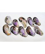 Seashells purple, Purple shells, GradeC, Wedding table decor, Wedding decor, Cra - $40.00