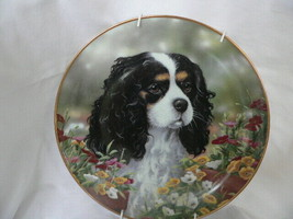 Danbury Mint Cavalier King Charles Spaniel Collector's plate Flower King - $12.86