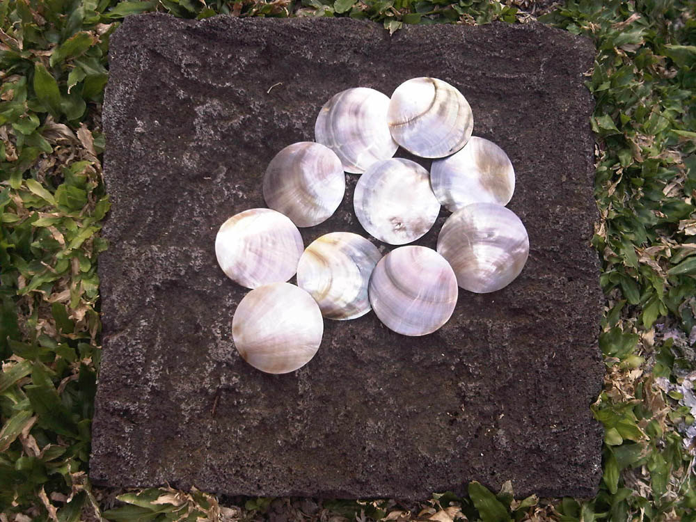 Primary image for 10 pcs Natural Mother of Pearl (MOP) Shell Black