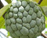 Il fullxfull.378895078 6895 thumb155 crop