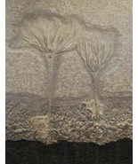 8.5X11 Ancient Fossil PLants Picture Fine Art New Poster Print Home Deco... - $12.16