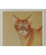 Abyssinian Cat Art Note Cards Solomon - $12.50