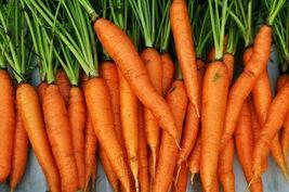 1000 Carrot Seeds Imperator 58 Daucus Carota Heirloom Gardening NON-GMO  - $1.79