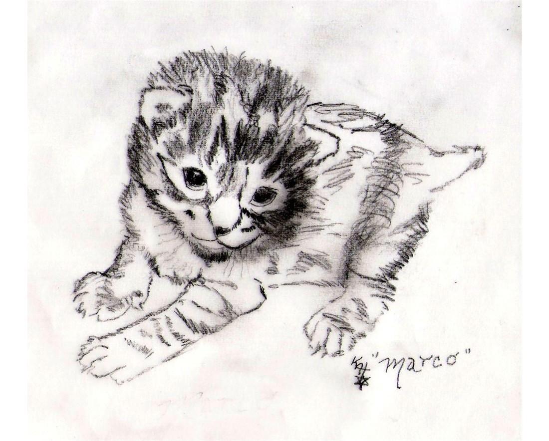 Black and White Custom Pet Portraits Cat Kitten Dog Puppy Kat-Renee Kittel